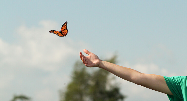 hand reaching out for butterfly
